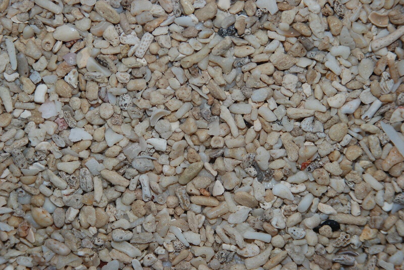 Aquarium Cichlid Coral Sand  25 Kilo Bag Sand Größe Approx 10 mm for Aquariums