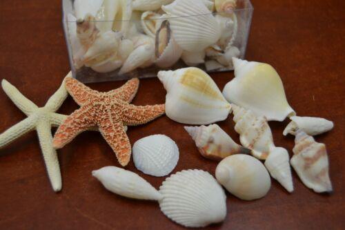 50 PCS ASSORT WHITE SEA SHELL WITH STARFISH BEACH WEDDING DECOR BOX #7633A