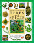 Herbs and Spices Encyclopaedia: The Ultimate Guide to Herbs and Spices, with Over 200 Recipes by Anness Publishing (Hardback, 1999)