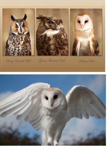 TischSet 3 D Eulen Platzset 2erSet Platzdeckchen Poster Bild Eule Greifvögel neu