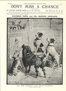 1892 Fanny Moody Superb Dog Classic Ad All Dogs Swear By It - Jarrow, United Kingdom - 1892 Fanny Moody Superb Dog Classic Ad All Dogs Swear By It - Jarrow, United Kingdom