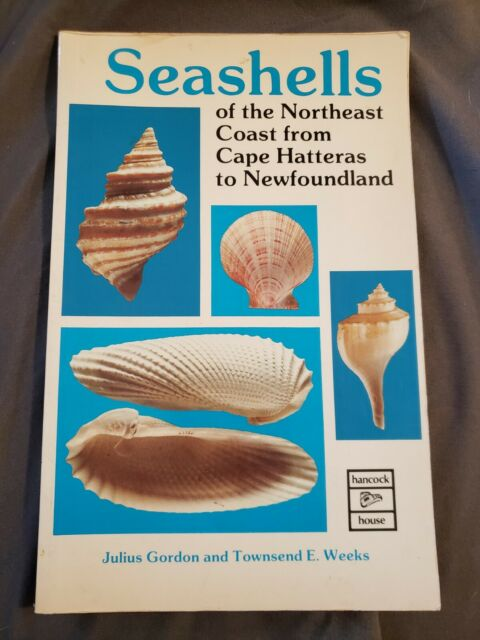 Seashells of the Northeast Coast from Cape Hatters to Newfoundland Gordon, J