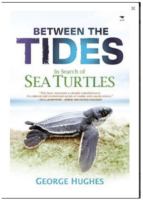 Between the Tides . In Search of Turtles