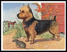 Australian Terrier And Rat Lovely Vintage Style Dog Print Poster
