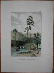 1852-Meyer-print-SCENE-NEAR-COLOMBO-CEYLON-SRI-LANKA-28