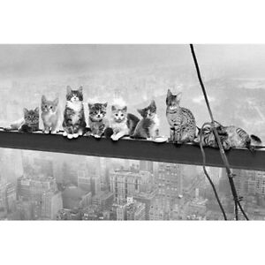 Cats-on-a-Girder-POSTER-61x91cm-NEW-Art-Creative-Animal-Photographic-Cute