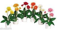 Gerber Daisy W/white Vase (set Of 6)
