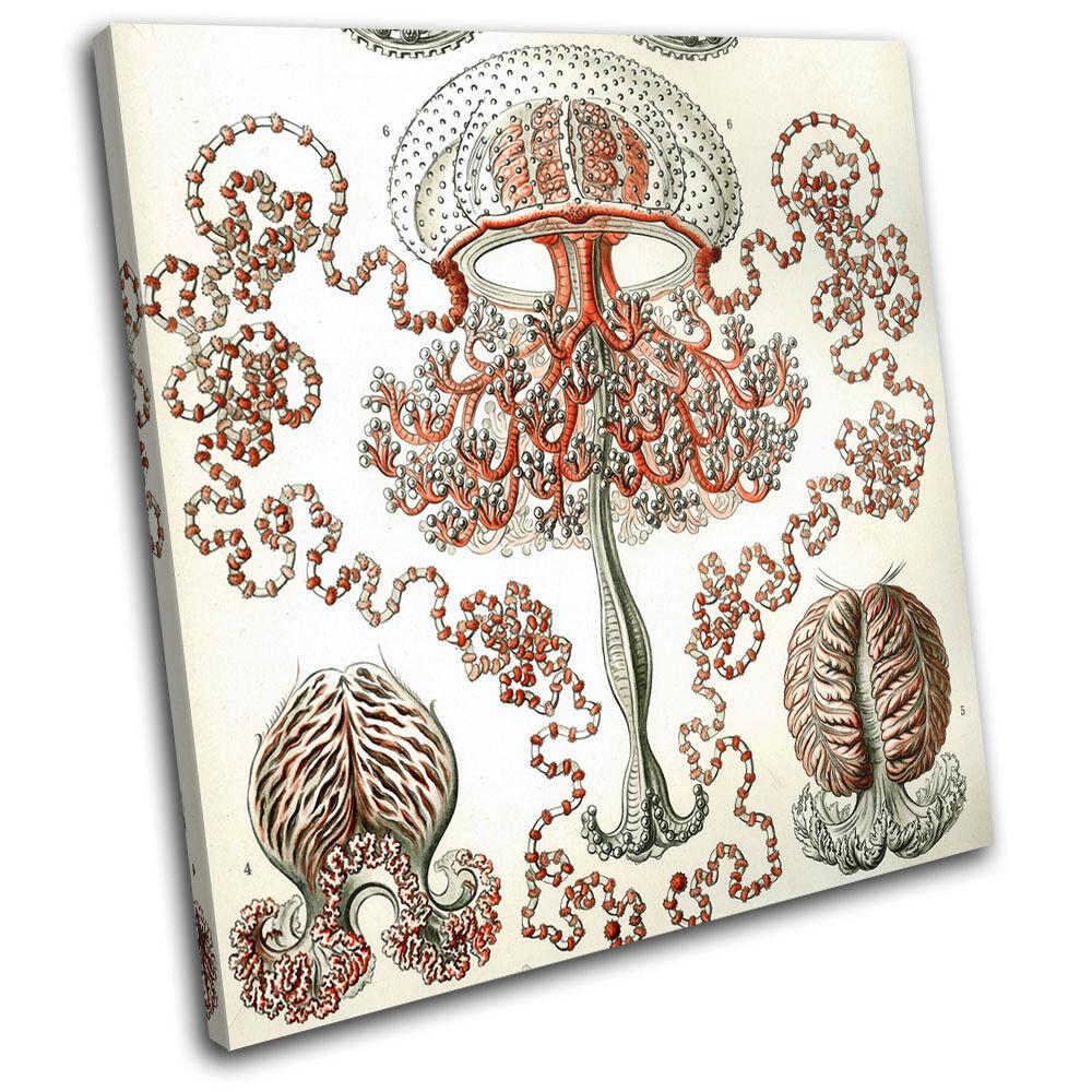 Botanical Jellyfish Vintage Animals SINGLE TOILE murale ART Photo Print