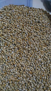 80-Grams-Millet-Coldstream-for-Birds-Canaries-Parakeets-Wild-Exotic
