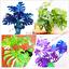 Palm-Turtle-Plants-Tree-Monstera-Ceriman-Bonsai-Home-Courtyard-100-PCS-Seeds-NEW thumbnail 1