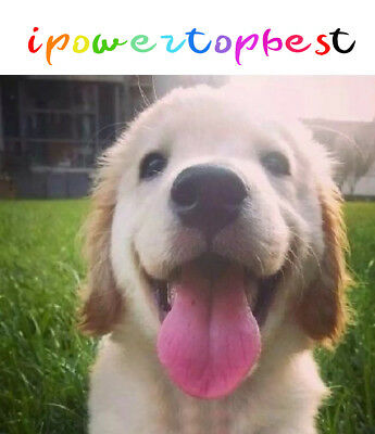 ipowertopbest