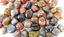 *SIX* Arizona Petrified Wood Tumbled Stone 25-30mm QTY6 Healing Crystal Peace