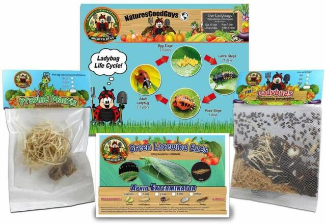 1 500 Live Ladybugs 2 Praying Mantis Eggs In Pouch 1000 Green