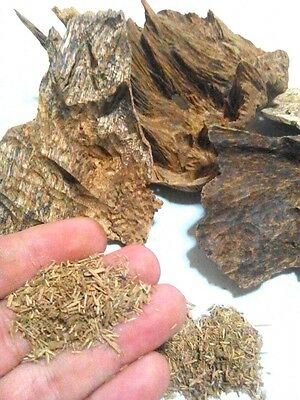 AGARWOOD Cambodia Koh Kong & Pursat Bodhi Natural Wild Sawdust powder 2gram+