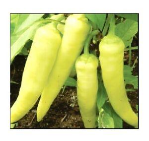 Sweet Banana Pepper Seeds | NON-GMO | Heirloom | Fresh Garden Seeds