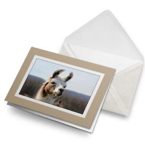 Greetings-Card-Biege-Beautiful-Llama-Alpaca-Wild-Animal-24612