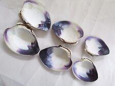 Quahog Wampum Hard Clam Shell 3 whole or 6 halves Purple