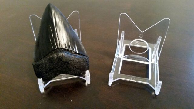 1 adjustable 2 display stand easel megalodon shark tooth teeth ebay