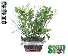 Small Plant Covert Hidden Spy Nanny Camera with Motion Activated DVR