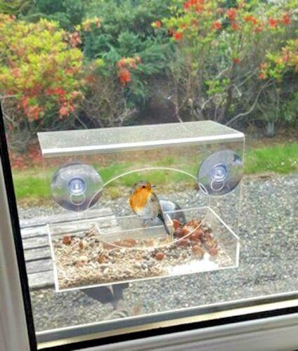 Bird Feeder Viewing Window Suction Hanging Perspex Bird Watching Peanut Gift New