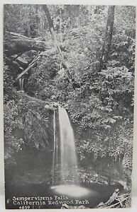 Spempervirens-Falls-Redwood-Park-1925-Cancel-USA-Postcard-Ak-Postcard-A2544