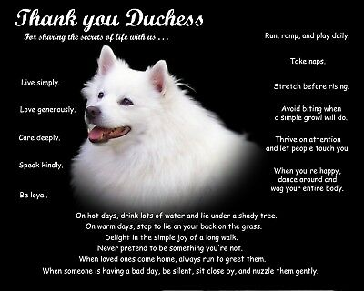 American Eskimo Personalize Dog Lover Gift For Custom Pet Portrait