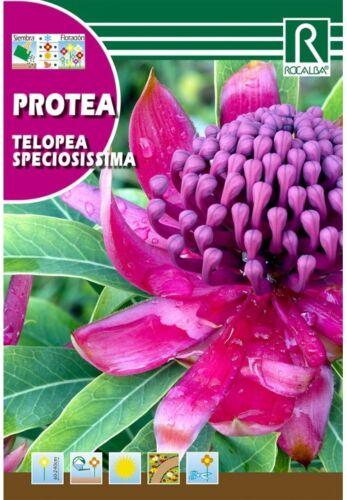 flores en sobre semilas TELOPEA SPECIOSISSIMA ROJA