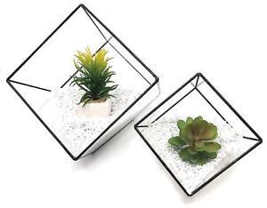 Ouvert D'Esprit 2 X Cube Verre Géométrique Succulentes Terrarium Tabletop Moss Plant Flower Display-afficher Le Titre D'origine