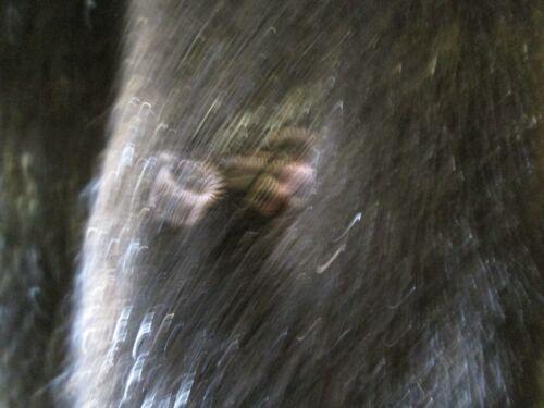 Llc Faux Damefrakke M Skandinavisk Størrelse Tiger Fur Mørkebrun Jakke J Nwt nfwBBxSA7