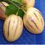Pepino-Seeds-Melon-pear-or-sweet-cucumber-Exotic-fruit-Ukraine-4-seeds thumbnail 10