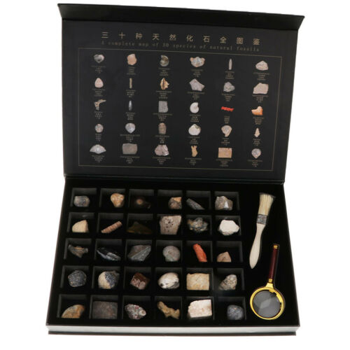 30pcs Fossils Specimens Biology Science Kit with Collection Index Sheet