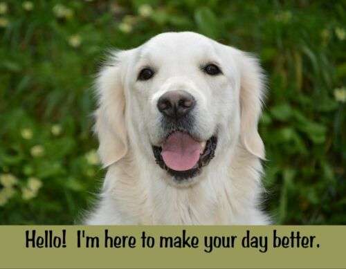 METAL FRIDGE MAGNET Dog Hello I/'m Here To Make Day Better Humor Love Retriever