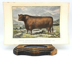 Antique Victorian etching of Gourlay Steell's original painting of cow & calf