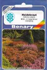 Heidekraut Sommerheide Besenheide Erika Calluna vulgaris winterhart ca500 Samen