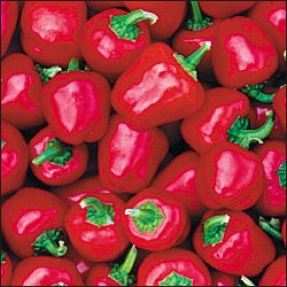 VEGETABLE SWEET PEPPER MINI BELL RED 100 FINEST SEEDS