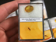 Baltic Amber with Insect Inclusion - 35-50 Million Years Old, Fly, Midge, Fossil