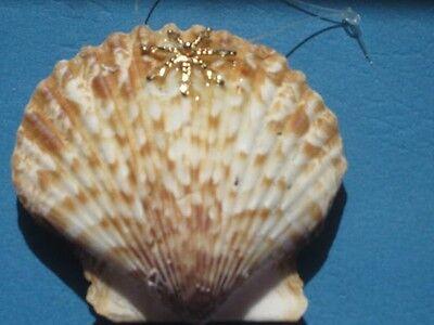 Free S/&H Glitter Seashell Christmas Ornament SPOTTED TONA
