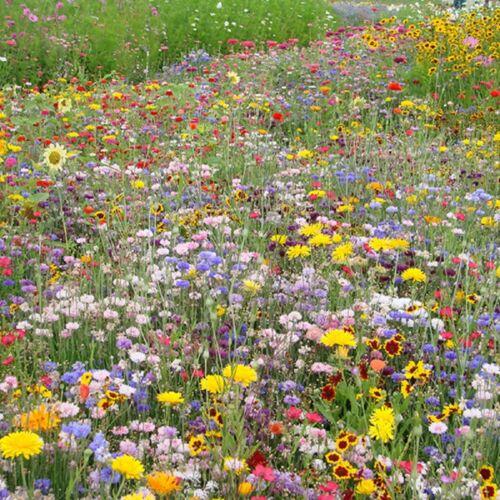 Prairie Mix Rigoletto 5g Seeds Flower Mix