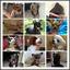 Bling-Rhinestone-Pet-Collar-amp-Leash-set-for-Small-Puppy-Dog-Cat-Chihuahua-XXS-S thumbnail 12