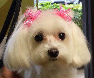 Dog Bow Sparkle Bows For Maltese Shih Tzu Yorkie Set Of 10 Ebay