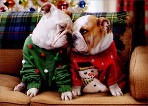 Avanti Christmas Bulldogs in Sweaters Funny / Humorous Dog Christmas Card |  eBay