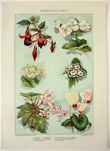 Botanical-Greenhouse-Plants-Authentic-1902-Dated-Stone-Chromo-Lithograph