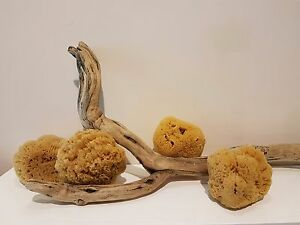 Natural-Mediterranean-Sea-Sponge-Largish-12-15-cm-4-5-034-Bath-Art-Craft