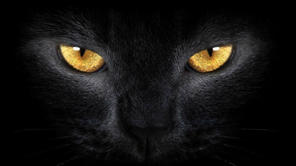 bramblesthewitchescat