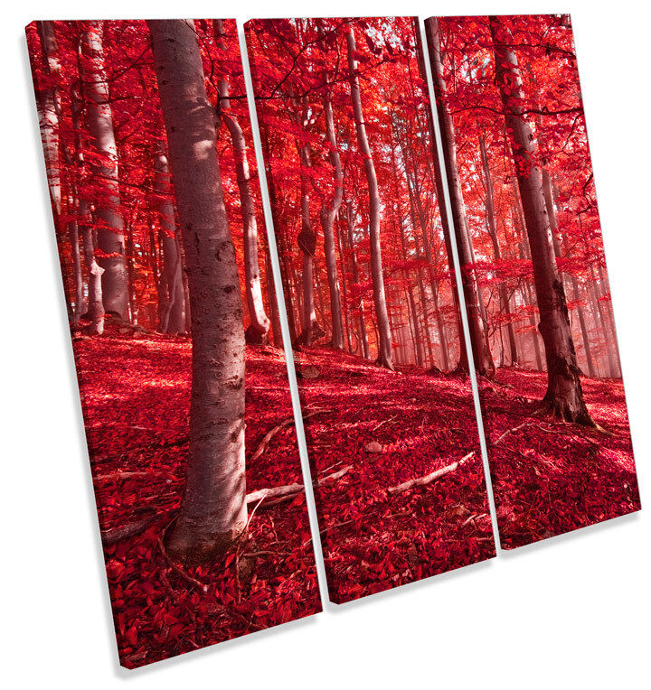 rot Forest Landscape TREBLE CANVAS WALL ART Square Print Picture