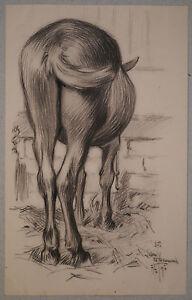 Beau-Dessin-Ancien-Fusain-Cheval-Animal-Ecurie-LUBIN-DE-BEAUVAIS-1897-XIXe