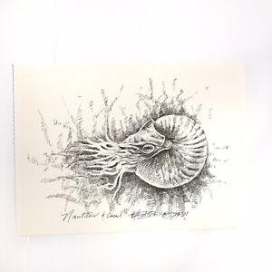 Nautilus illustration Original ocean Art drawing sea sketch listed by artist