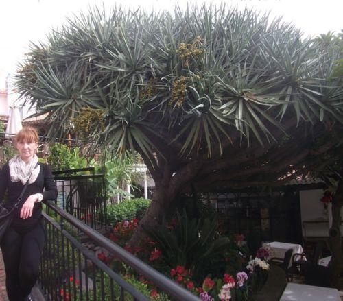 Die Deko Dekoidee für das Frühjahr zu Ostern den Flur Yucca Torrey Palme Samen
