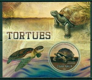 Madagascar-2014-Marine-Life-Turtles-odd-shape
