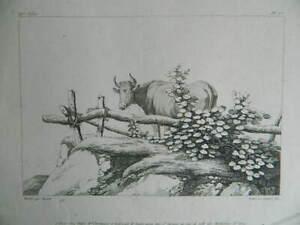 Stampa Da Bocquet Incisione Lambert Fili Casa Basset Animale Mucca C.1804
